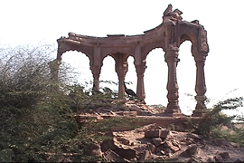 ancient ruins and desi babool bush