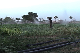 organic farm with sprinklers