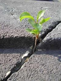 plant growing in crack in the road
